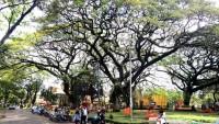 Peran Pohon Sebagai Penyejuk Suhu